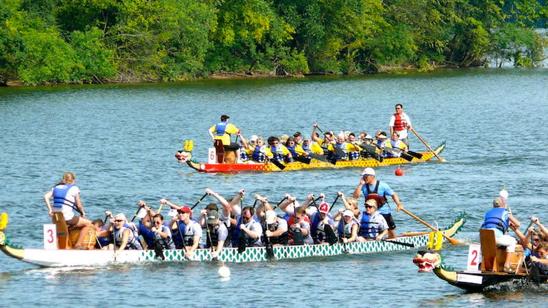 Dragon boat race, Isle of Wight, 2015, Isle of Wight Festival