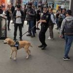 Sniffer dogs at a train station in NSW